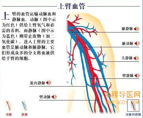 图解:脉管炎发生坏疽的临床症状