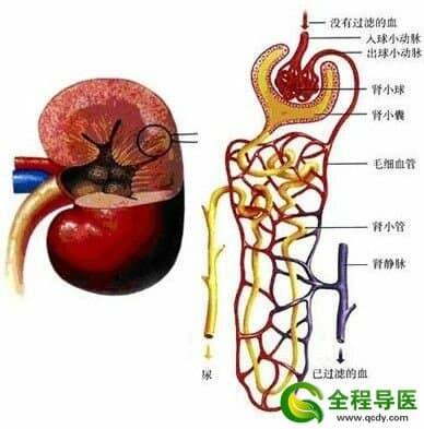 肾病及肾功能衰竭的预防方法